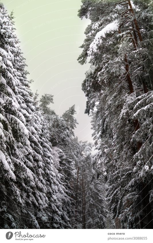 winter landscape Winter Snow Winter vacation Nature Tree Forest Relaxation Dream Gigantic Calm Loneliness Leisure and hobbies Cold Environment Colour photo