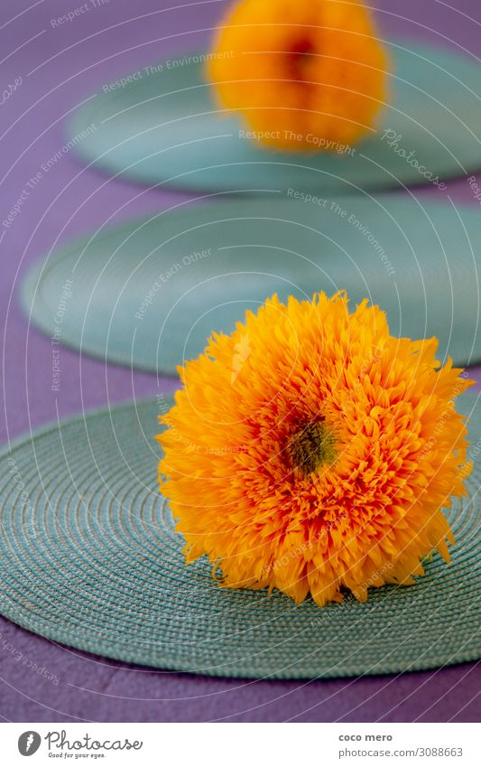 Sunflower II Harmonious Relaxation Calm Meditation Living or residing Decoration Plant Blossom Dream Fresh Warmth Yellow Violet Orange Turquoise Happiness