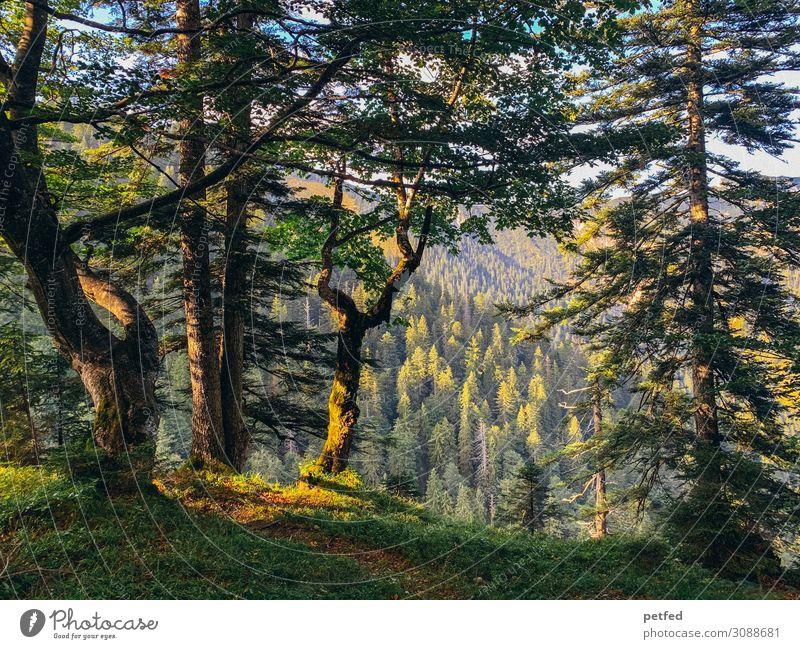 The forest like a painting Nature Sunlight Summer Tree Forest Mountain Retro Beautiful Brown Yellow Green Calm Design Uniqueness Peace Idyll Art Moody