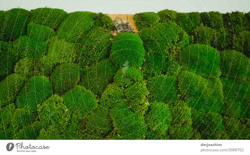 1 x moss missing Design Harmonious Trip Decoration Art Sculpture Nature Beautiful weather Moss Hall Bavaria Germany Small Town Manmade structures Wall (barrier)