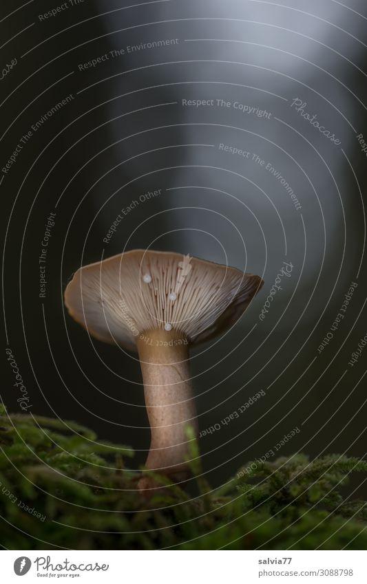 Nature Plant Forest Dark Autumn Environment Growth Mushroom Moss Slat blinds Mushroom cap