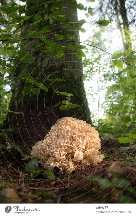 Nature Plant Sun Tree Leaf Forest Autumn Environment Exceptional Wild Earth Growth Uniqueness Tree trunk Mushroom Bizarre