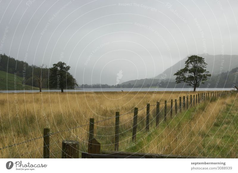 Lake District Landscape Fog Tree Field Mountain Peace Nature Calm Far-off places Subdued colour Exterior shot Deserted Day Panorama (View)