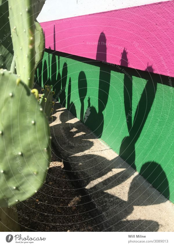 Cactus Casting Shadows on a Colorful Wall Plant Plantlet Desert Green Pink Minimal