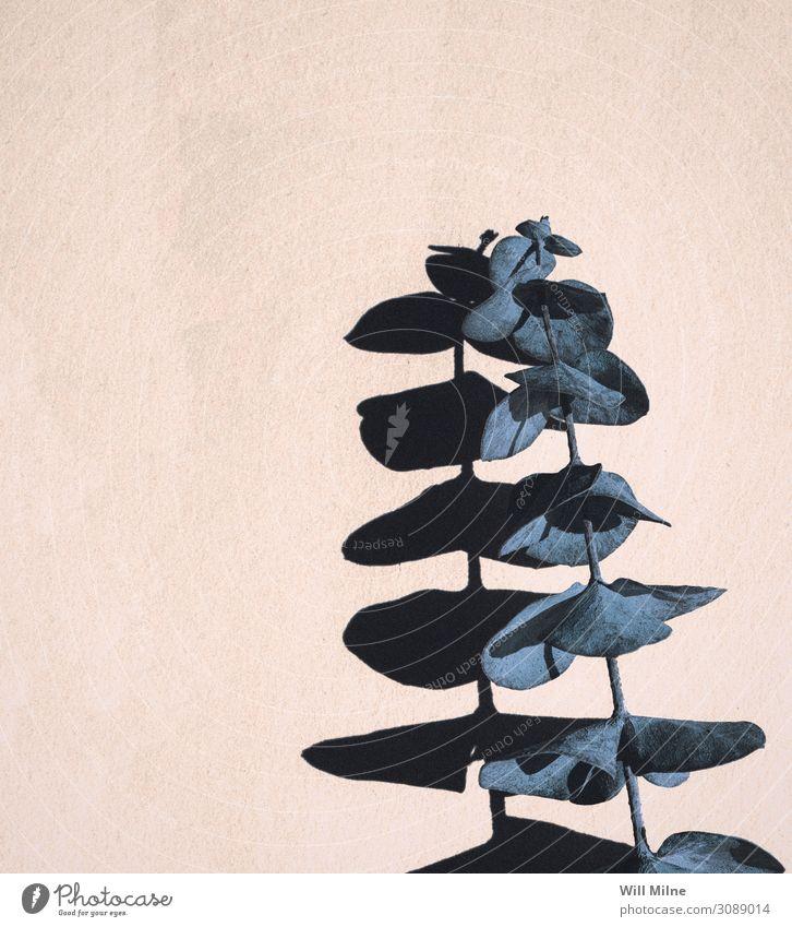 Blue Eucalyptus Plant Casting a Shadow Eucalyptus tree Eucalyptus blossom Encalypta Leaf Plantlet Minimal Copy Space