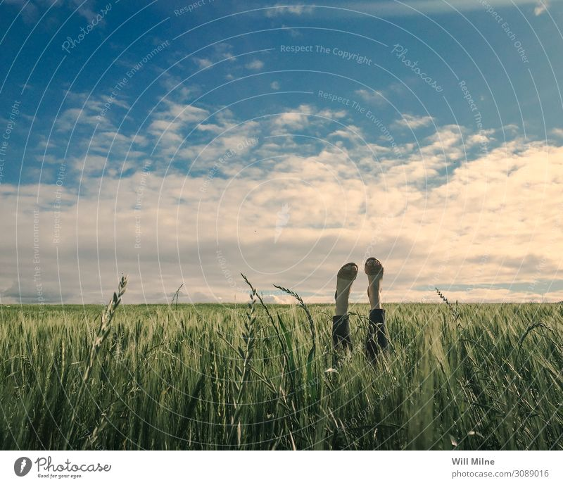 Woman in Field with Feet in the Air Legs Wheat Sky Green Blue Lie Downward Ground