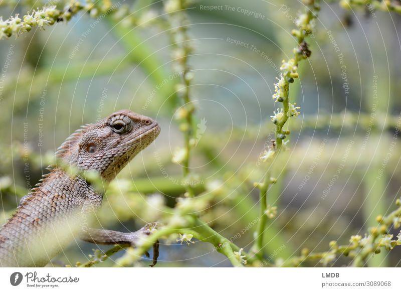 Lizard in profile lizard Reptiles Flake vigilantly covert Hidden lurking Copy Space right Copy Space top flora fauna detail eye contact Environment Nature
