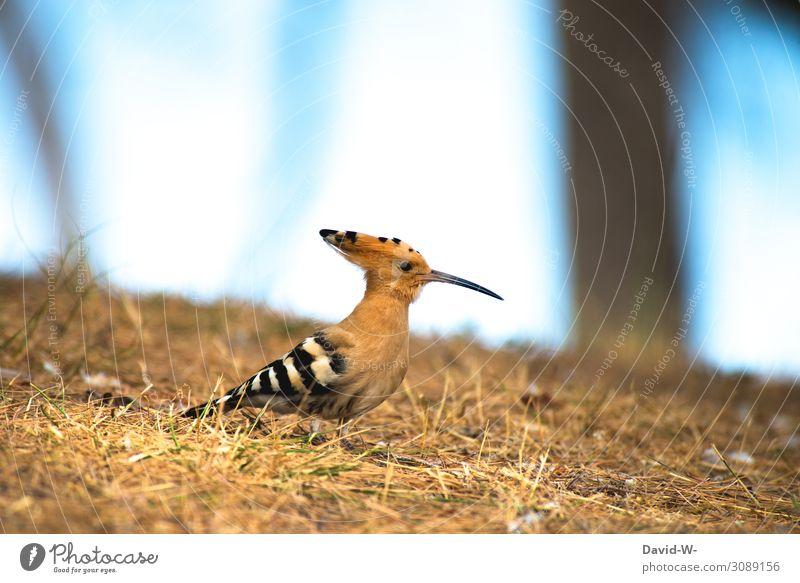 small exotic bird with long beak Bird Exotic Beak Long wittily Hoopoe Funny Cute Small Animal
