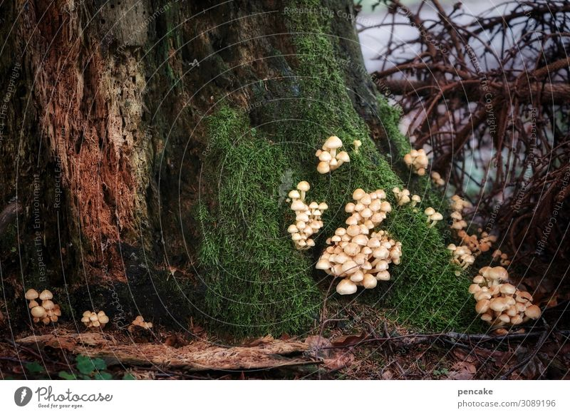 ambush Nature Elements Earth Autumn Tree Bushes Moss Forest Together Astute Mushroom Existence Multiple Many Ambush Scene Dramatic Twigs and branches Growth