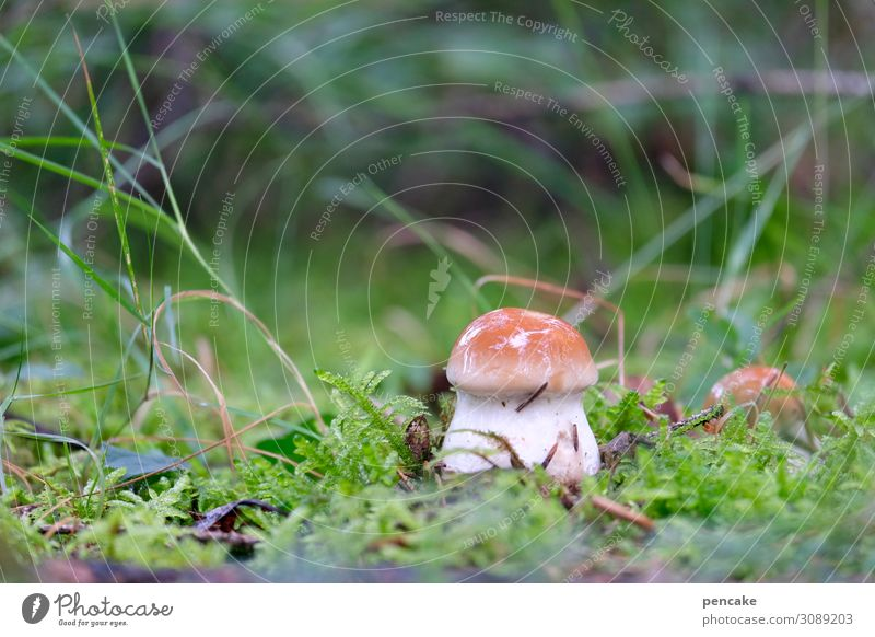 Hello Again! Food Nature Elements Earth Autumn Plant Grass Moss Forest Fresh Boletus Mushroom Macro (Extreme close-up) Colour photo Exterior shot Close-up