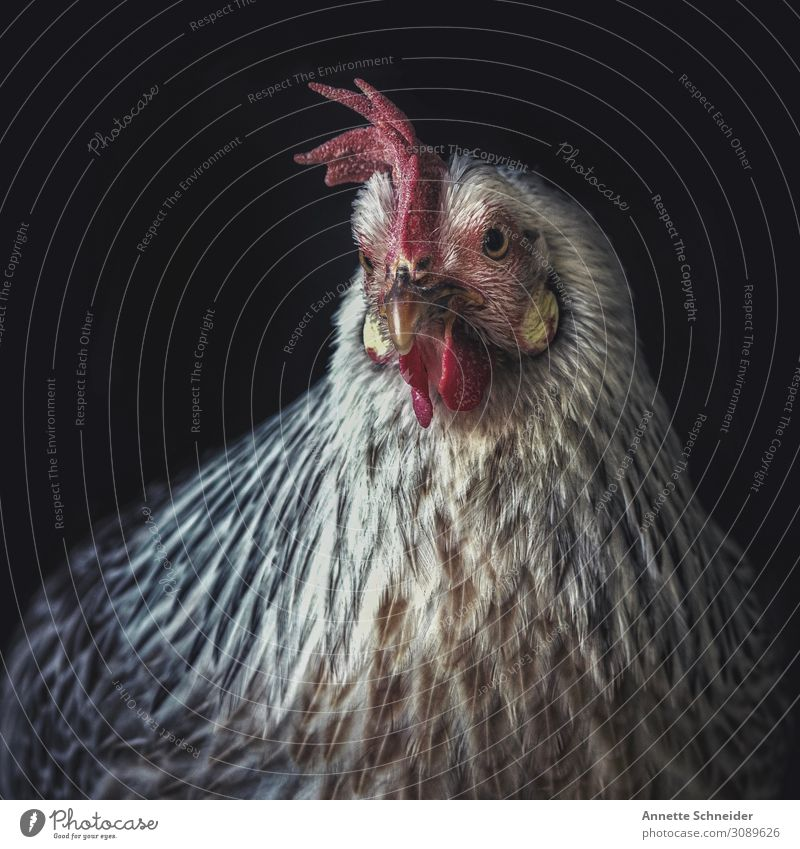 Animal Environment Organic produce Pet Barn fowl Farm animal Love of nature