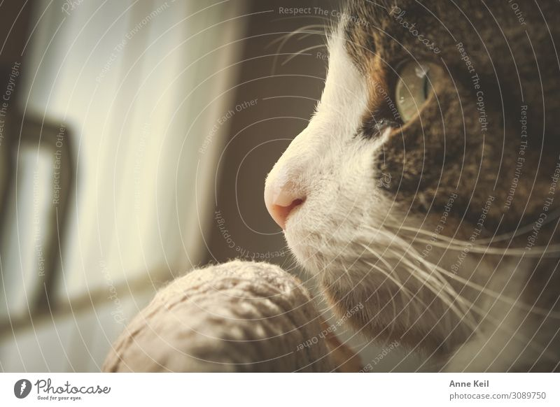 Hangover in profile Animal Pet Cat Animal face 1 Anticipation Trust Warm-heartedness Love Love of animals Dedication Attentive Patient Colour photo