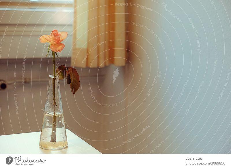 Nostalgia, orange Living or residing Flat (apartment) Decoration Room Autumn Flower Blossom Moody Vase Rose Drape Curtain Orange Subdued colour Interior shot