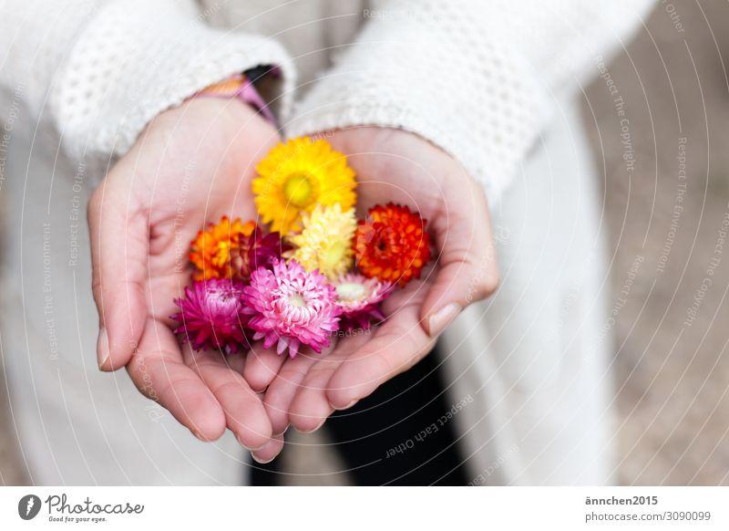 Woman Nature Summer Plant Hand Flower Autumn Yellow Blossom Orange Pink Bright Seasons Pick Dried flower