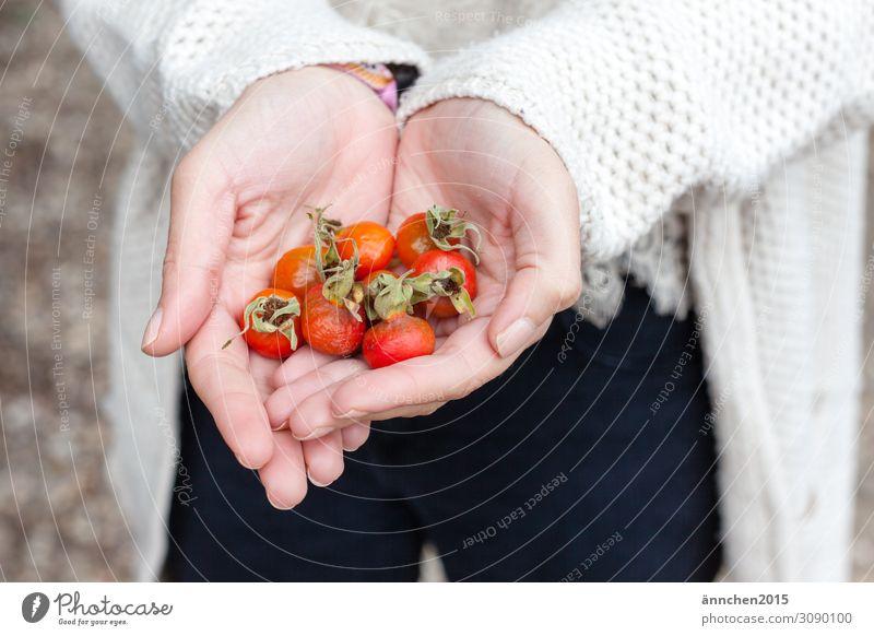 Nature Red Hand Autumn Orange Fruit Bright Accumulate Rose hip