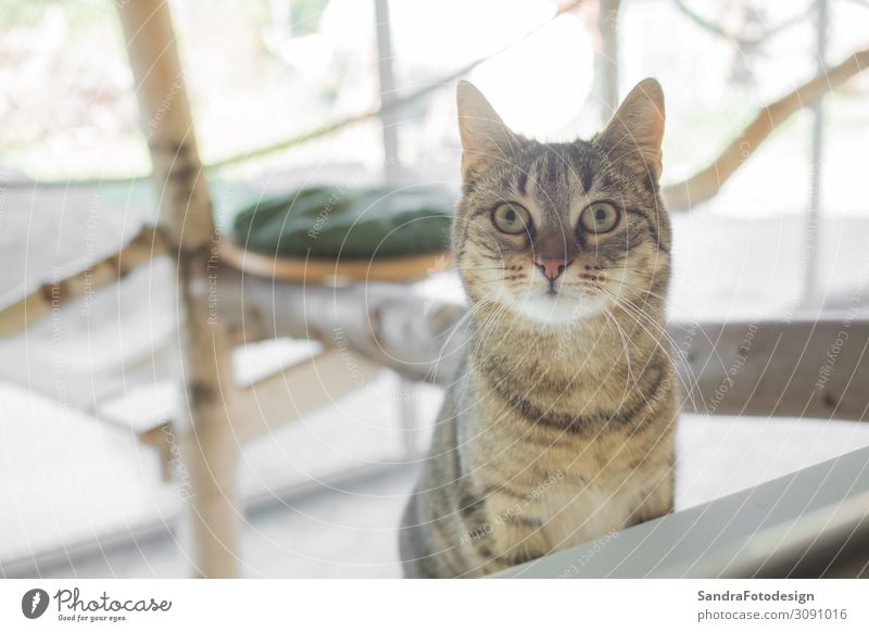 Cat looks curiously at the camera Nature Animal Pet Pelt 1 Observe Discover Sit Jump Smart Love of animals Background picture cute furry domestic adorable