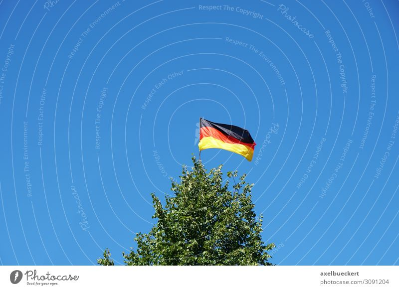 German flag on tree top Environment Nature Landscape Sky Cloudless sky Beautiful weather Wind Tree Garden Forest Sign Flag Gold Red Black Germany German Flag