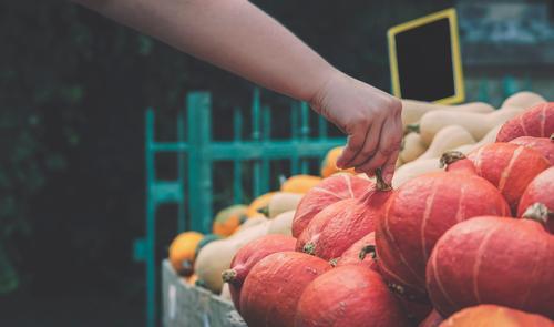 Pumpkins market. Woman hand picking a pumpkin Food Vegetable Nutrition Vegetarian diet Shopping Thanksgiving Hallowe'en Gastronomy Hand Autumn Natural Tradition