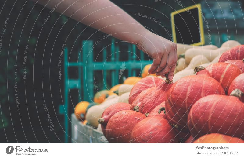Pumpkins market. Woman hand picking a pumpkin Hand Food Autumn Natural Nutrition Shopping Vegetable Symbols and metaphors Tradition Gastronomy Vegetarian diet