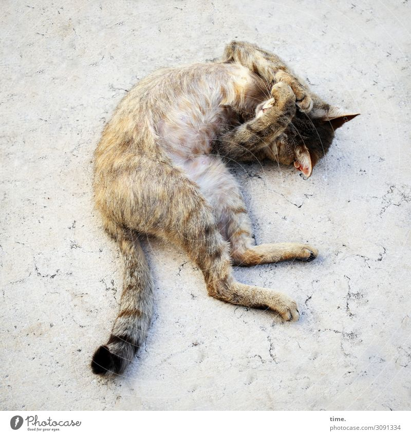 after sleep is before sleep Italy Places Marble Pet Cat 1 Animal Movement Rotate Lie Sleep Dream luck already Town Warmth Passion Protection Serene Authentic