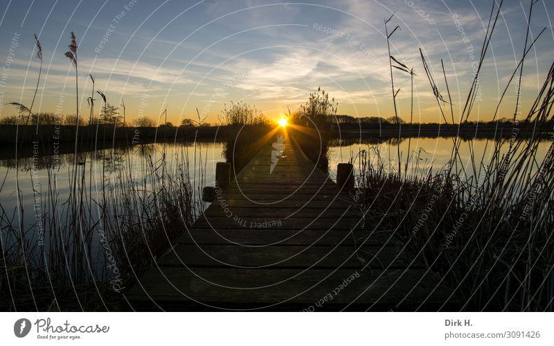 sundowner Nature Landscape Water Sky Sun Sunrise Sunset Sunlight Spring Coast Lakeside River bank Baltic Sea Bog Marsh Pond Observe Freeze Running Looking Wait