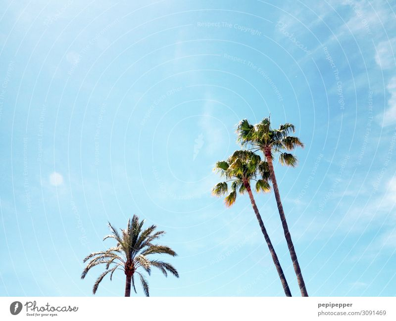 palm Vacation & Travel Tourism Trip Far-off places Summer Summer vacation Plant Sky Tree Palm tree Blue Colour photo Exterior shot Deserted
