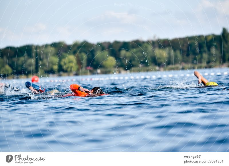 Triathlon Swimming Athletic Sports Sportsperson Sporting event Swimming & Bathing Lake Human being 5 Group 18 - 30 years Youth (Young adults) Adults