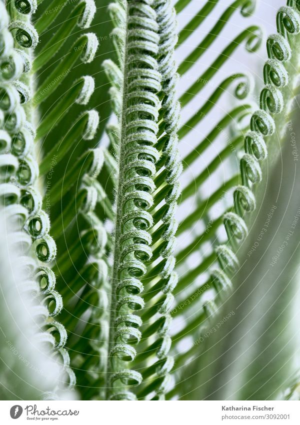 Nature Summer Plant Green White Tree Leaf Winter Autumn Spring Growth Exotic Palm tree Climate change Palm frond