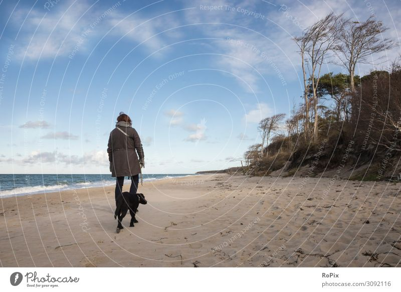With the Labrador on the beach of the Baltic Sea. Dog To go for a walk North Sea coast Ocean Stone Sea State Beach White crest Gale Coast Scotland sea ocean