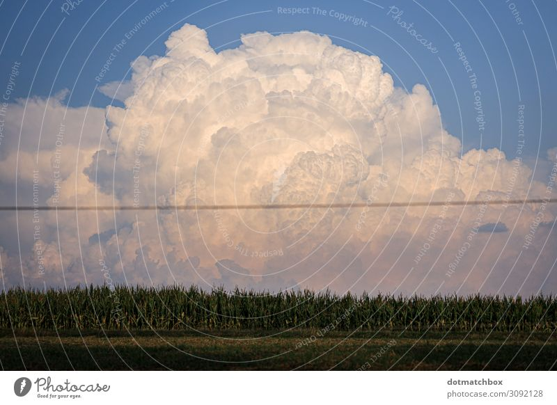 The little cloud Environment Nature Landscape Plant Sky Clouds Storm clouds Summer Autumn Climate Weather Thunder and lightning Field Exceptional Gigantic Large