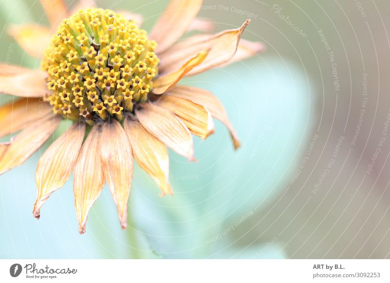 lately Nature Plant Flower Blossom Yellow Green Orange Happy Contentment Sympathy Colour photo Subdued colour Exterior shot Detail Copy Space right