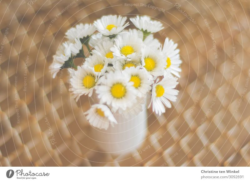 A small bouquet of daisies in a white vase Nature Plant Flower Blossom Daisy Friendliness Happiness Small Near Modern Natural Cute Beautiful Brown Yellow White