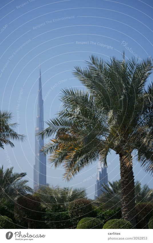 pseudo giant Dubai United Arab Emirates var World exposition 2022 Burj Khalifa High-rise Architecture Tourism Money Economy Palm tree Garden