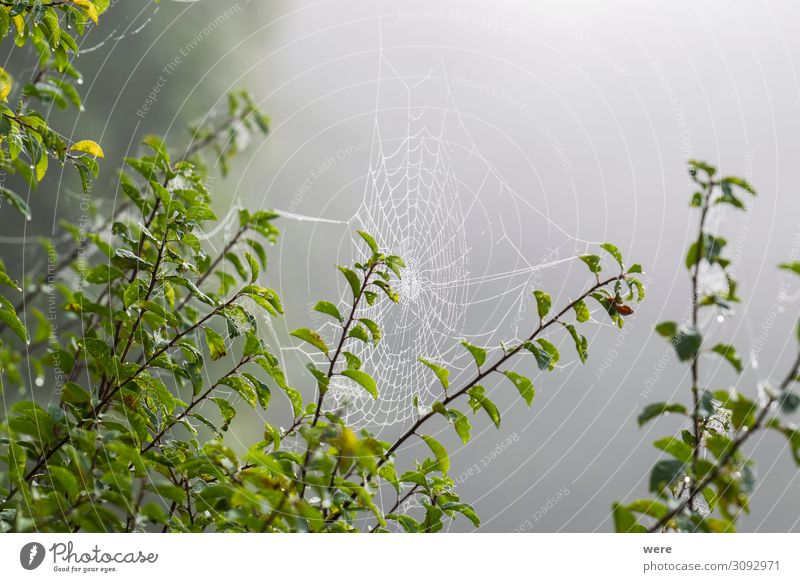 Cobwebs in morning dew Internet Nature Dinghy Animal Spider Cold Wet Natural Emotions Calm Grief Loneliness cobweb cobwebs copy space dewy forest Glitter meadow