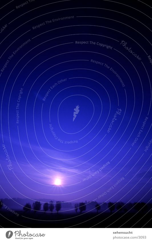 Sky Tree Sun Blue Black Fog Horizon Earth