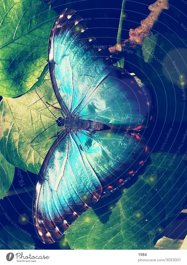 Blue beauty Nature Animal Butterfly Glittering Illuminate Dream Exceptional Exotic Happiness Uniqueness luck Optimism Brave Warm-heartedness Hope Beginning