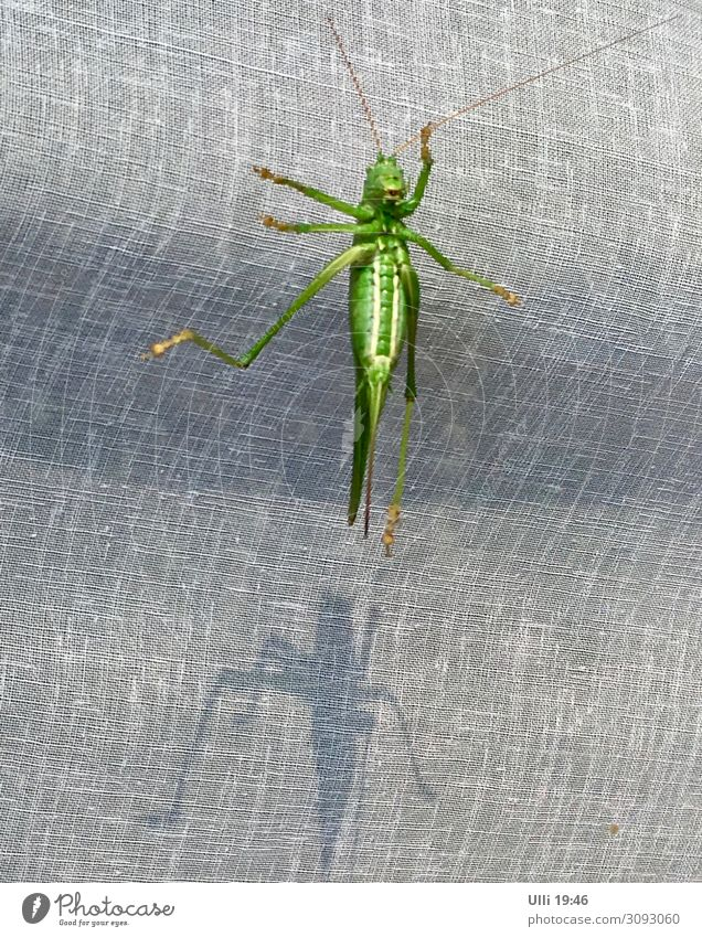 At the window: My number HUNDRED! Animal Animal face Locust grasshopper 1 Glass Animal tracks Observe Relaxation To hold on Hang Crouch Crawl Esthetic Athletic