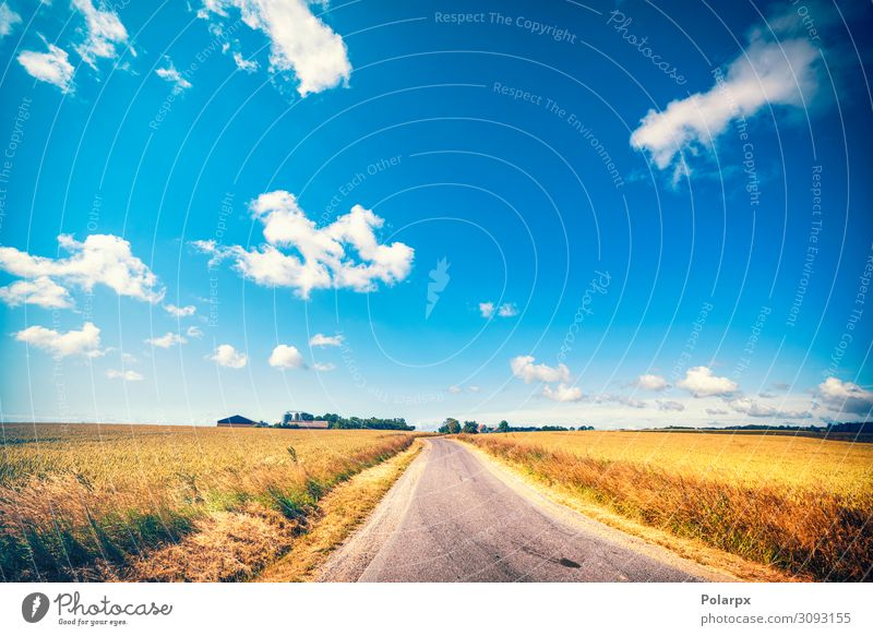 Road leading to a farm in the summer Beautiful Vacation & Travel Summer Sun Nature Landscape Earth Sky Clouds Tree Grass Leaf Meadow Transport Street