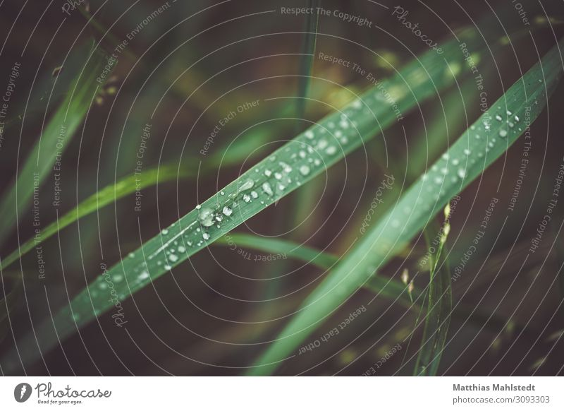 Grasses with raindrops Environment Nature Plant Drops of water Summer Leaf Glittering Fresh Natural Green Contentment Colour photo Subdued colour Exterior shot