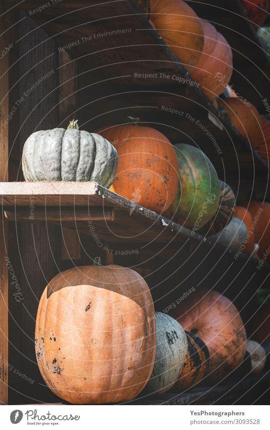 Pumpkins harvest on wooden shelves. Collection of pumpkins Vegetable Nutrition Vegetarian diet Healthy Eating Decoration Gardening Autumn Green Tradition