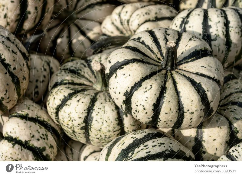 Striped squash pile. Background with a multitude of pumpkins Vegetable Organic produce Vegetarian diet Thanksgiving Hallowe'en Gastronomy Autumn Winter Green