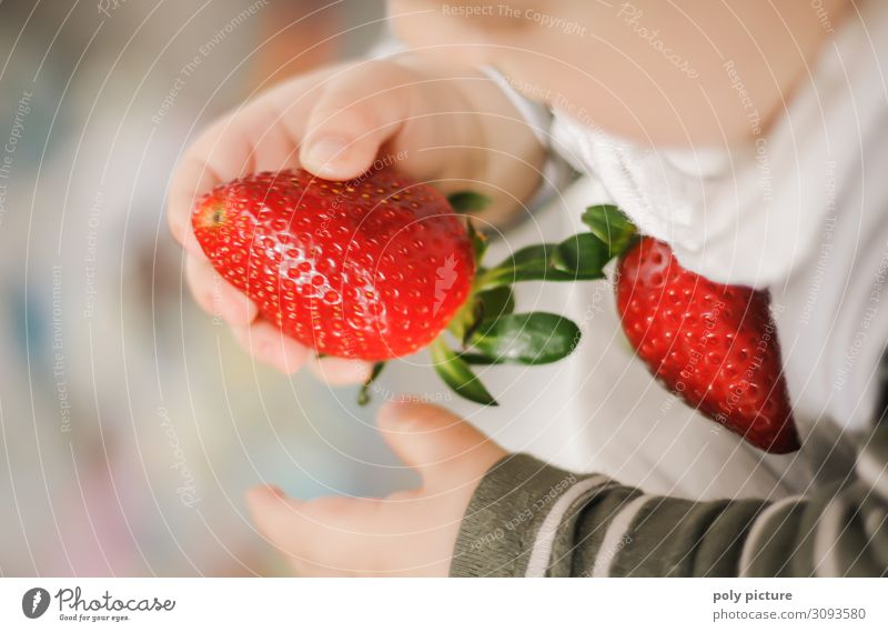 Baby hands holding strawberry Shallow depth of field Blur Light Copy Space bottom Copy Space top Interior shot Multicoloured Colour photo Spring Climate change