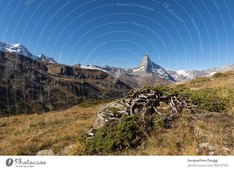 Zermatt - Matterhorn Hiking Nature Landscape Autumn Bushes Alps Mountain Relaxation Happy Colour photo Exterior shot Day