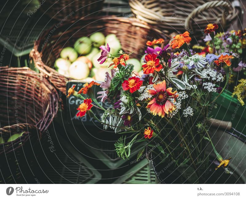 autumn bouquets Vegetable Fruit Organic produce Shopping Well-being Contentment Summer Environment Autumn Plant Flower Blue Brown Gray Orange Red Markets
