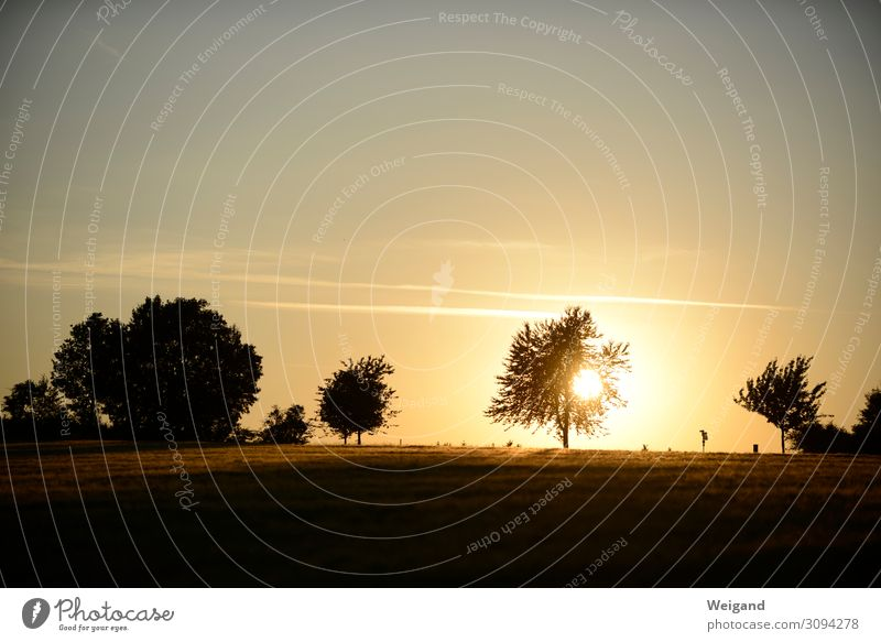 summer Contentment Relaxation Thanksgiving Environment Nature Landscape Sun Sunrise Sunset Sunlight Tree Meadow Field Brown Friendship Together Humanity