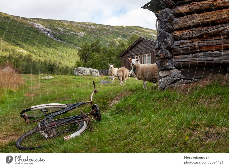 Rural idyll Vacation & Travel Tourism Freedom Cycling tour Hiking Agriculture Forestry Nature Landscape Grass Meadow Mountain Village Deserted