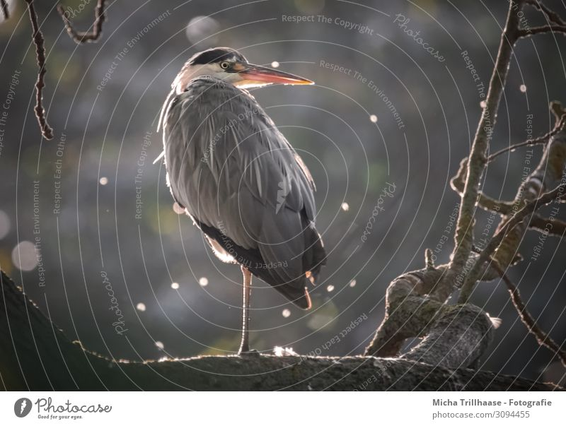 Nature White Sun Tree Relaxation Animal Black Yellow Eyes Orange Bird Gray Head Illuminate Glittering Wild animal