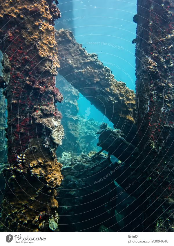Coral Crusted Collapsed Pier Underwater in Hawaii Vacation & Travel Nature Blue Colour Landscape Ocean Joy Life Exceptional Fresh Adventure Uniqueness