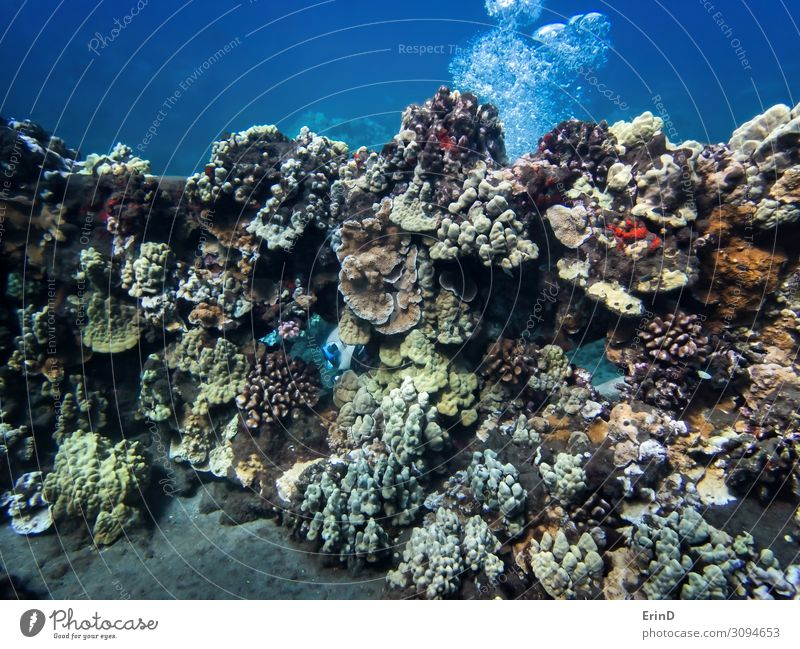 Diver Appears Through Wall Covered in Coral Joy Life Vacation & Travel Adventure Ocean Nature Landscape Discover Exceptional Cool (slang) Fresh Uniqueness fish