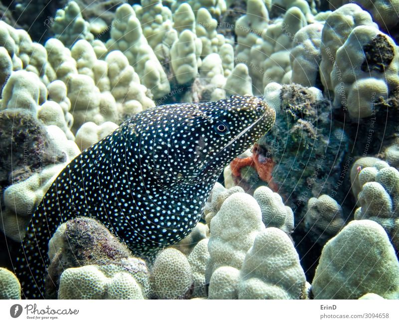 Whitemouth Moray Eel Close Up Underwater Life Vacation & Travel Ocean Dive School Nature Virgin forest Discover Exceptional Cool (slang) Fresh Uniqueness SCUBA